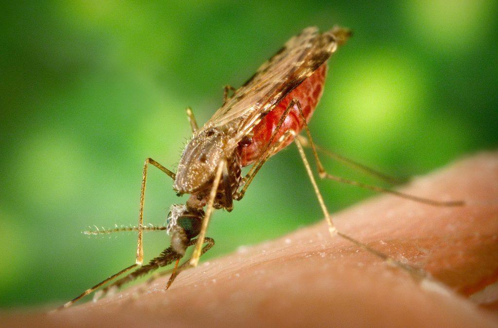 Малярия у беременных: причина когнитивных нарушений у ребенка