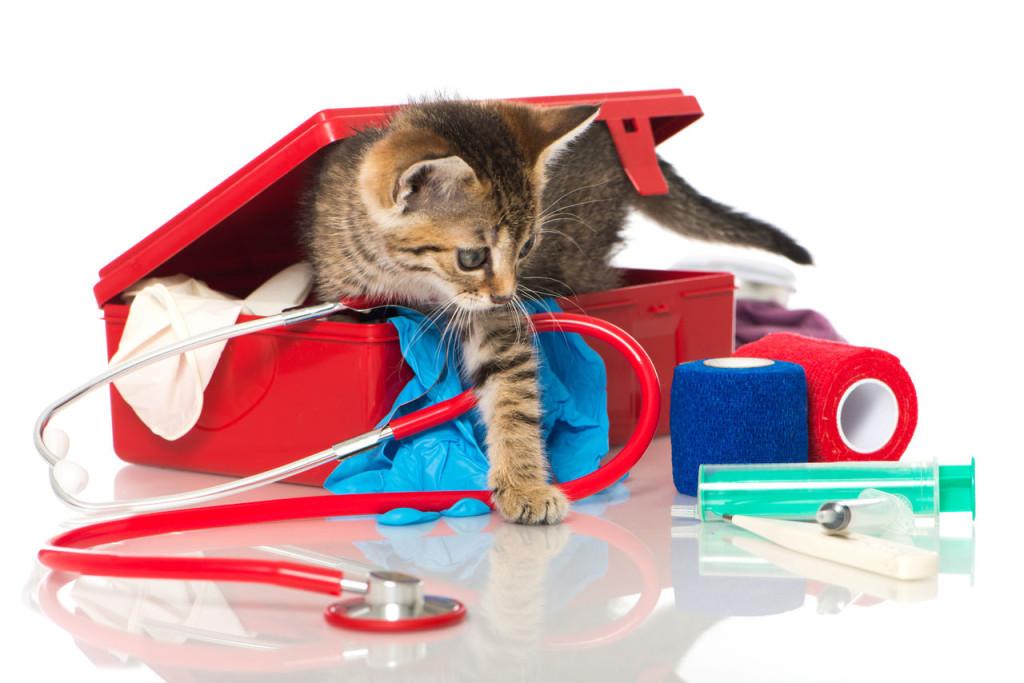 Первая помощь питомцу дома до визита к ветеринару