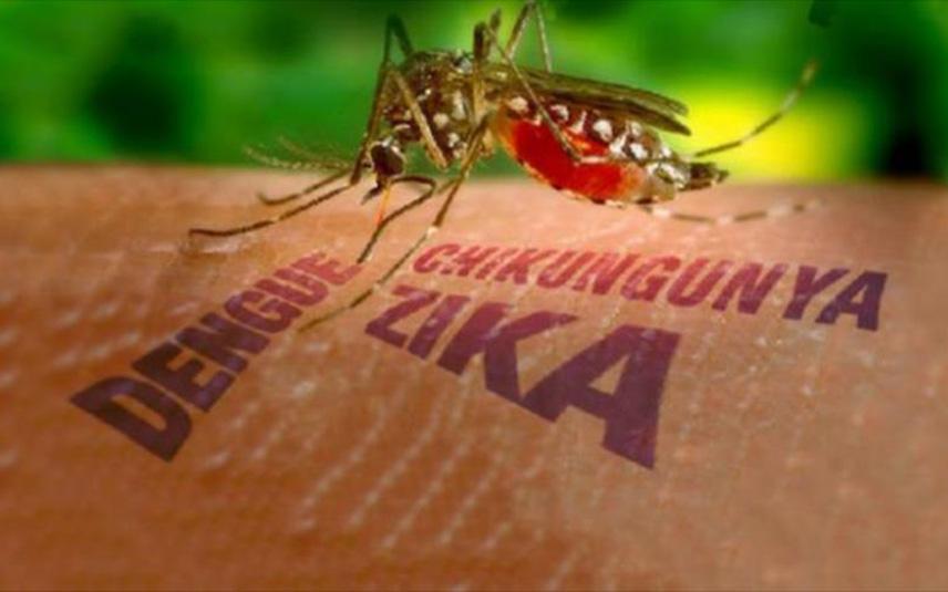 В России отмечен четвертый случай завоза вируса Зика