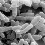 В США описан случай инфицирования Escherichia coli, устойчивой к колистину