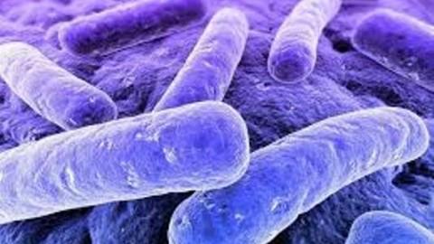 Игра научит учёных определять туберкулёз