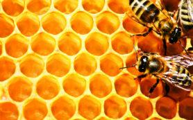 Эффективнее антибиотиков оказался мед