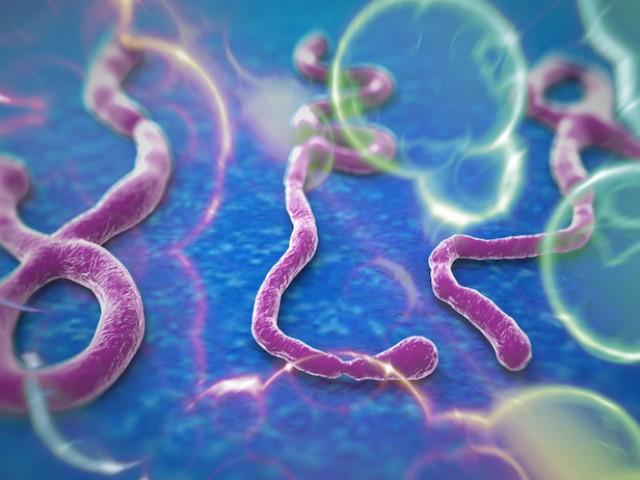 Медики: у некоторых людей есть иммунитет против вируса Эбола