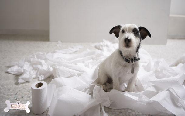 Особенности заболевания экзокринной недостаточности поджелудочной железы у собак