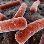 Туберкулез зародился в Африке, - исследователи