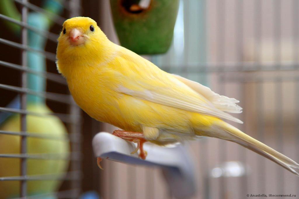 Домашние питомцы — птицы