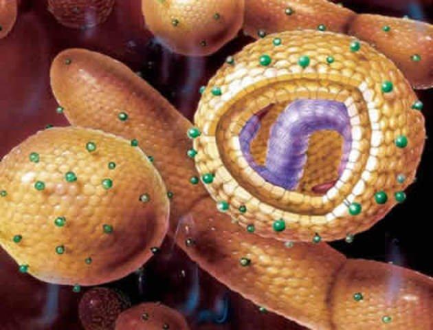 Новая опасность гепатита А : возбудитель прячется в оболочку