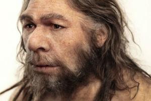 Европейцы унаследовали от неандертальцев сильный иммунитет и алкоголизм