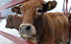 Малый бизнес в селе, или можно ли заработать на курочках и коровках