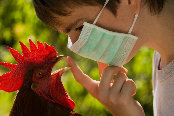 Более 350 тыс. кур уничтожили в Астраханской области из-за птичьего гриппа