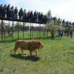На сафари в Крым