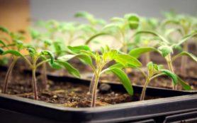 Удобрение растений: календарь садовода на май