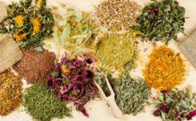 Сбор трав при мастопатии и другие народные рецепты