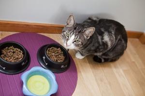 Как правильно кормить кошку: какой корм самый лучший