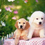 Домашние питомцы могут заразить хозяина сотней инфекций