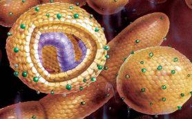 Разработан метод определения вируса гепатита С в слюне