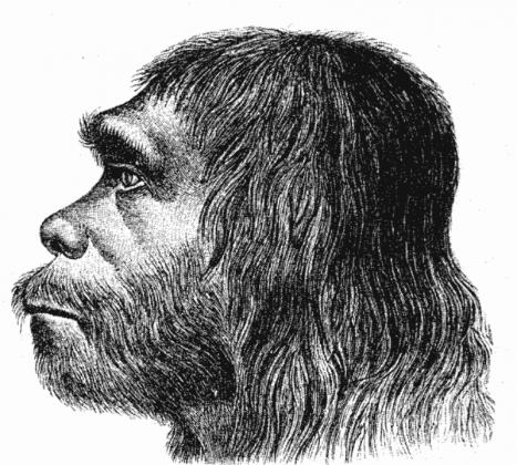 Неандертальцев «уличили» в использовании природных антибиотиков и аспирина