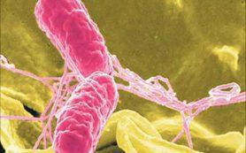 Найдены антигены, которые победят сальмонеллез