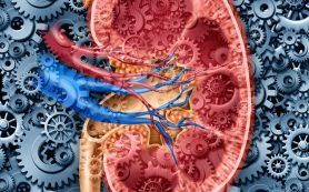 Гепатит С, полученный от инфицированной почки, можно излечить
