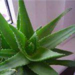 Индийские травы и специи обладают сильными антибактериальными и антираковыми свойствами