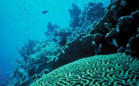 Ученые пересмотрели роль вирусов в экосистемах коралловых рифов