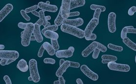 Специалистам так и не удалось установить источник больничной инфекции в университетской клинике Франкфурта-на-Майне
