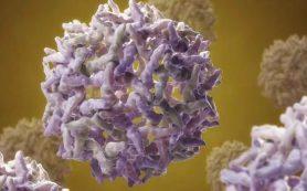 В Вашингтоне зафиксирована вспышка хантавируса