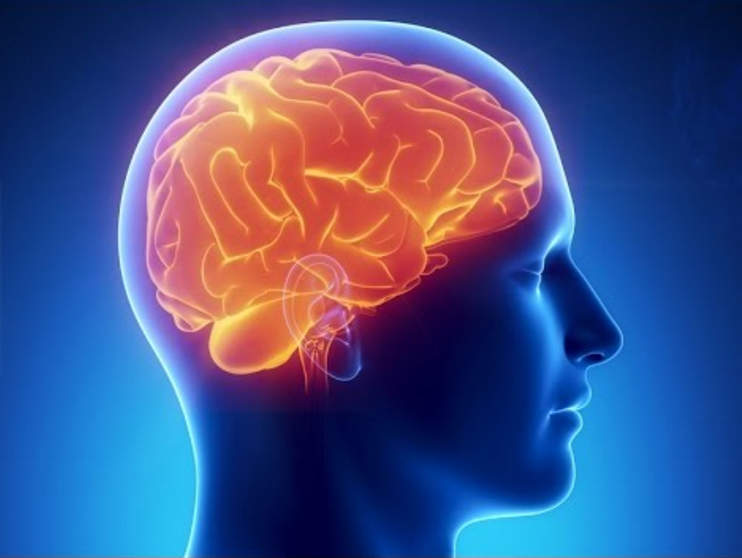 Медики узнали, как грибок попадает в мозг