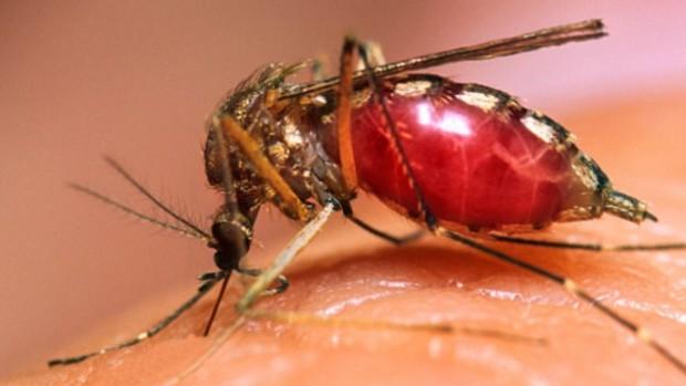 Вакцина от малярии может быть утверждена в 2018 году