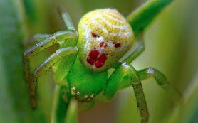 Разносчики вирусов — экзотические насекомые
