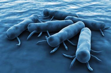 Вспышка сальмонеллеза: врач назвал самый опасный продукт