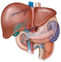 Гепатит А или болезнь Боткина: заражение, лечение
