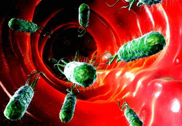 В реке Уда в границах Улан-Удэ обнаружили бактерии сальмонеллы
