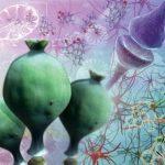 В Германии нашли безопасную альтернативу обезболивающим-опиоидам