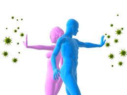 Иммунные системы плода и взрослого человека развиваются из различных типов стволовых клеток