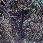 Вещество из мягких кораллов обнаружило противораковые свойства