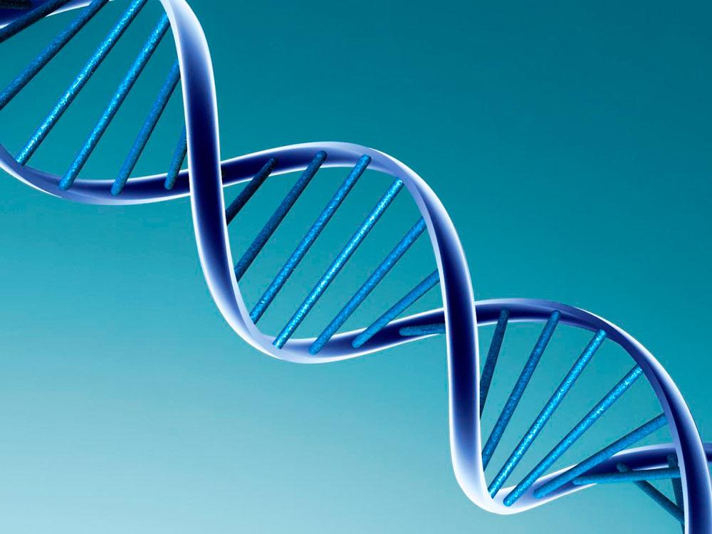 ДНК вируса ВИЧ удалось выделить из живой ткани