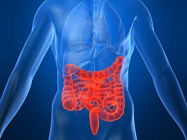 Иммунная система в желудочно-кишечном тракте должна защищать и приспосабливаться