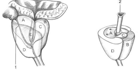 Новая методика лечения рака предстательной железы