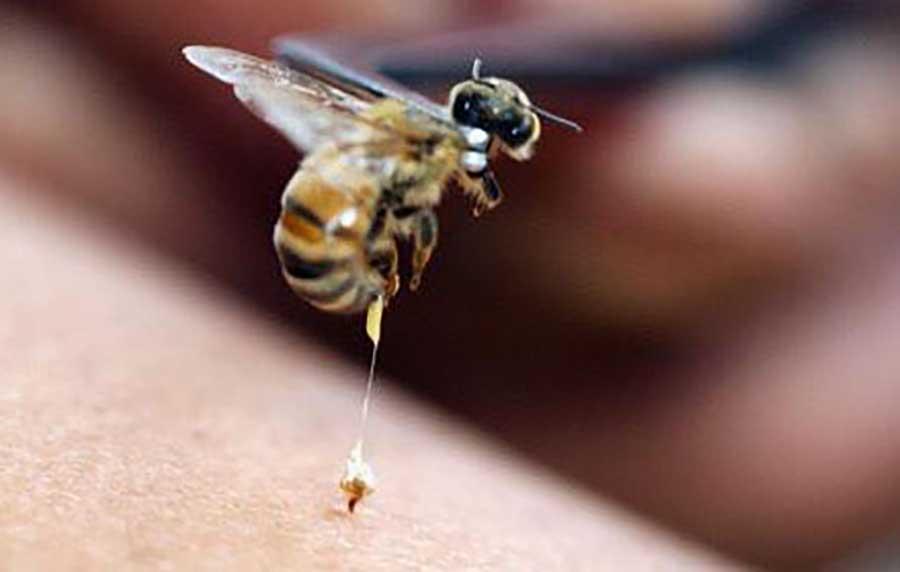 Сильный токсин может стать основой противовирусной терапии
