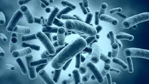 Аллергия: плата за борьбу с паразитами