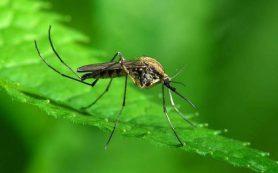 Каждый пятый россиянин боится заразиться ВИЧ от комаров