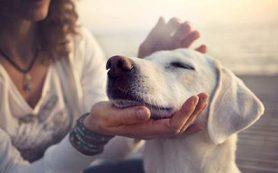 Ученые выяснили, как собаки могут повлиять на ваше здоровье