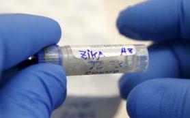 Медики: Вирус Зика все ещё нуждается в исследованиях