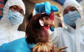 Роспотребнадзор предупредил об опасности вспышки птичьего гриппа в Европе