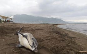 В Бразилии вирус стал причиной смерти свыше 170 дельфинов
