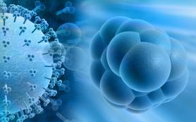 Чем лечится цитомегаловирусная инфекция