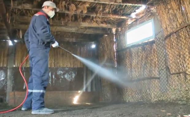 Высокая зараженность клещей зафиксирована в северных районах Кызылординской области