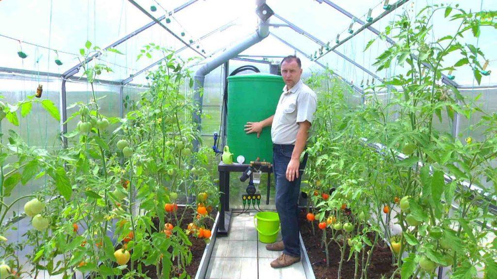 Выращивание овощей в собственной теплице