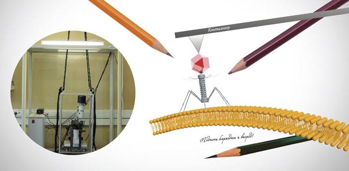 Вирус под микроскопом: от визуализации к манипуляции